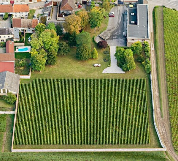 """An aerial view of the famous Krug owned vineyard in Ambonnay called """"Clos d'Ambonnay""""."""
