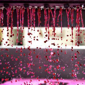 Pressing the Pinot Noir at Hoddles Creek Vineyard in Yarra Valley.