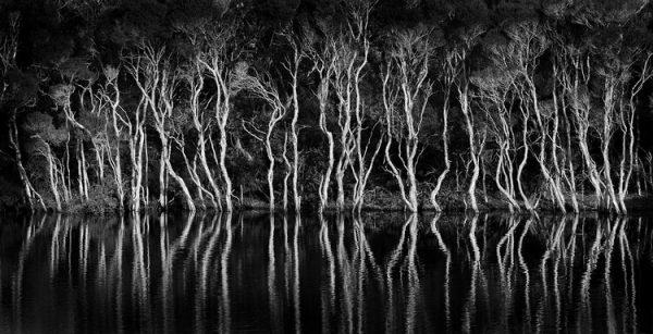 The Gardens Creek - Bay of fires Tasmania.